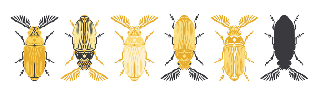 Set of stylised feather-horn beetle insect, vector illustrations, isolated on a white background.