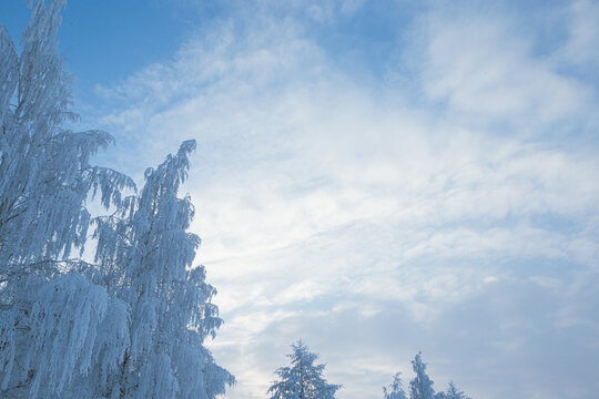 Tree covered in hoarfrost and sky