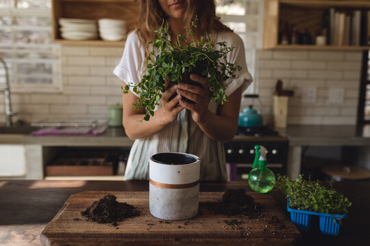 Midsection of caucasian woman potting plants standing in sunny cottage kitchen