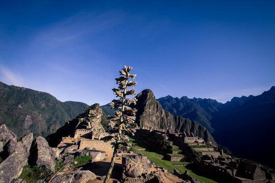 wild plant overlooking Machu Picchu