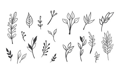 Fototapeta Floral and herbal ornament hand drawn designs. Leaves and branches nature doodles. obraz