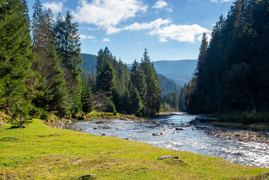 landscape with river in mountains. nature scenery with spruce trees on the grassy shore. stones in the water stream running through the alpine valley on a sunny autumn day