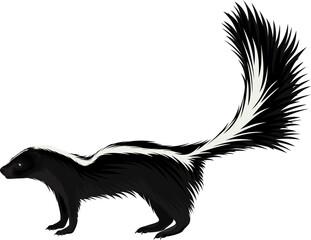 vector North american striped skunk