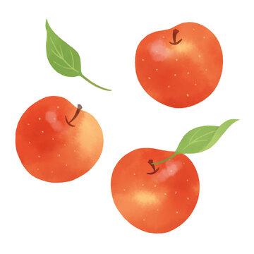 りんごの手描きイラスト/水彩タッチ