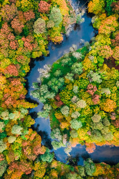 Forest and river in autumn. Aerial view of wildlife, Poland.