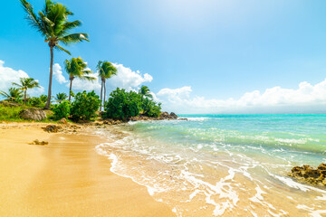 Palm trees in beautiful Bas du Fort shore in Guadeloupe - fototapety na wymiar