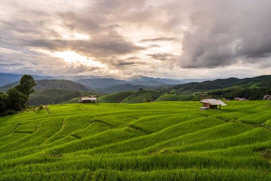 Beautiful Landscape green rice terraces field in Pa Pong Pieng, Chiangmai Thailand