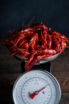 Crawfish on a kitchen scale