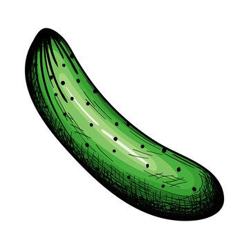 Cucumber Icon