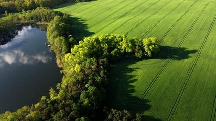 Fototapeta Jezioro, las, pole. Lubuskie obraz