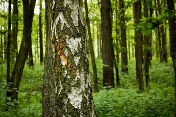 drzewa do wycinki