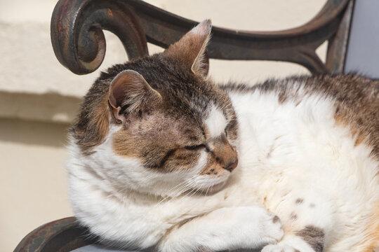 Lying down tabby cat on a bench