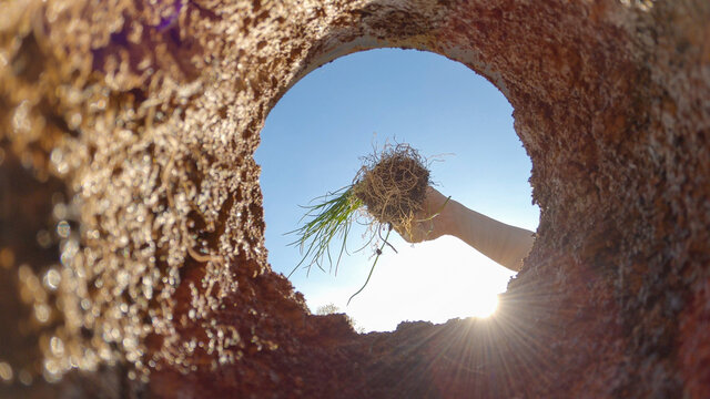 BOTTOM UP, LENS FLARE: Unrecognizable person plants a sapling in their garden.