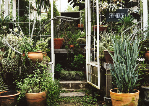 Greenhouse with various plants