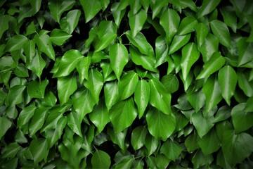 Zielone li艣cie 4