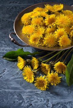 Bright yellow dandelions on blue background