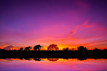 Canvas Prints Pink Safari theme.Amazing sunset and sunrise.Panorama silhouette tree in africa with sunset.Dark tree on open field dramatic sunrise.