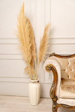 Stylish Scandinavian living room interior of a modern apartment with pampas grass and a cozy sofa in light colors. A piece of beige classical sofa and pampas grass in a vase. Pampas grass. Home decor