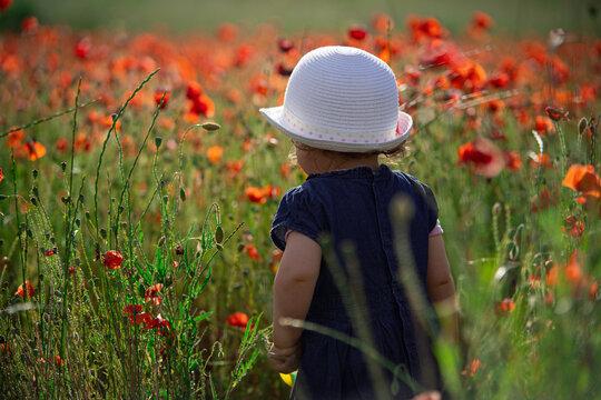 cute girl in a poppies field