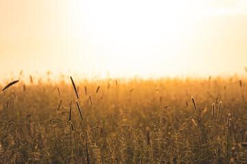 Trawy na leśnej polanie oświetlone wschodzącym słońcem.