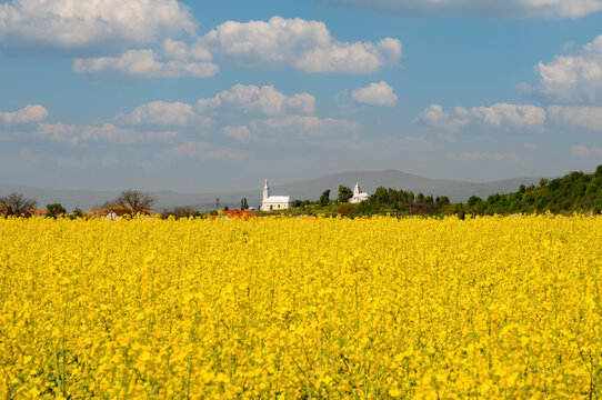 Blooming canola field on foreground and two churches and mountain hills on background
