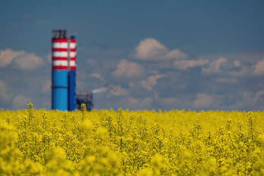 Blooming canola field on foreground and chemical plant tower on background. Agro-industrial concept