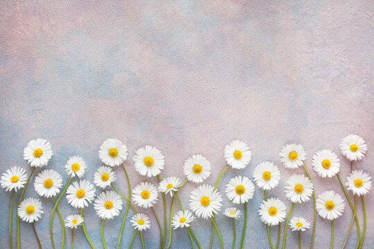 Daisy flowers on a decorative colorful background, space for text congratulations, postcard.