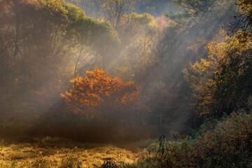 Poranna mgła w jesieni i promienie słońca - w środku samotne drzewo