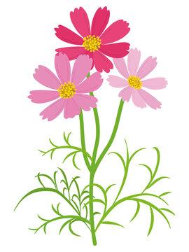 カラフルなコスモスの花