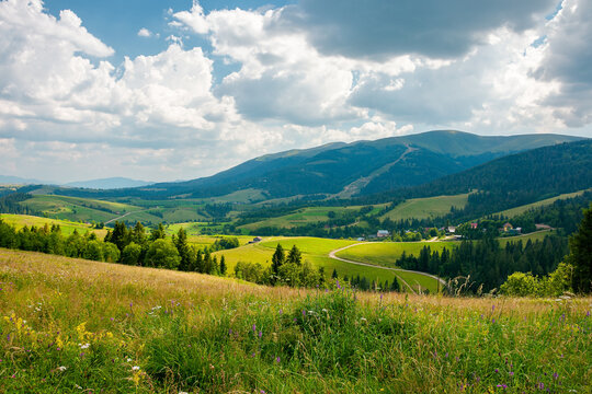 carpathian mountain rural landscape in summer. forest on the grassy meadow. fields and pastures on the distant hills. sunny scenery with fluffy clouds on the blue sky in afternoon light