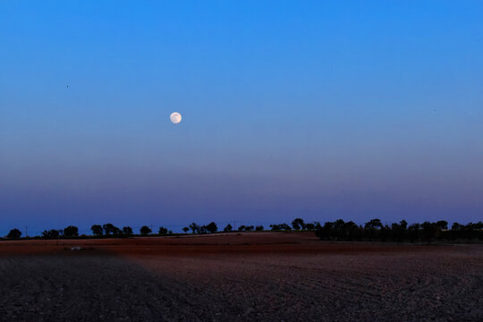 Full moon in the wheat field. Panoramic rural landscape with the full moon rising at dusk, in Castilla la Mancha, Spain