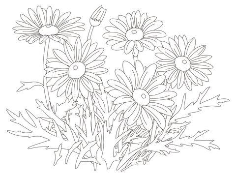 花のぬり絵 マーガレットの花