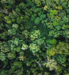 green forest in the tropics from above - fototapety na wymiar
