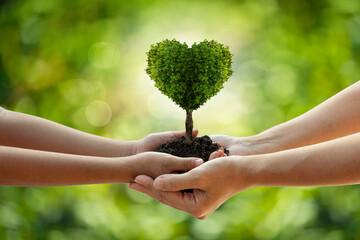 Fototapeta environment Earth Day Hands from nature. Girl hands holding heart shape trees growing on bokeh green background.  obraz