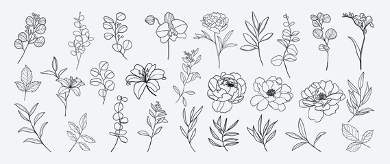 Fototapeta Minimal botanical hand drawing design for logo and wedding invitation. Floral line art.  Flower and leaves design collection for bouquets decoration, card and packaging background. obraz