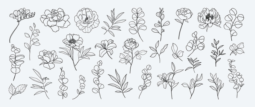 Minimal botanical hand drawing design for logo and wedding invitation. Floral line art.  Flower and leaves design collection for bouquets decoration, card and packaging background.