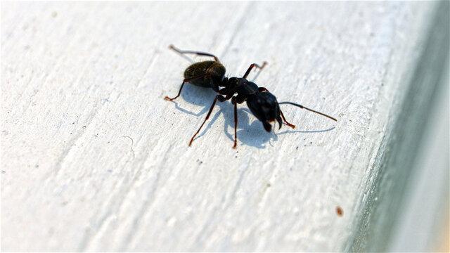 Macro Close Up of Ant