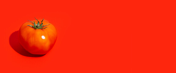 Fototapeta one ripe red tomato on a red background. Top view, flat lay. Banner obraz