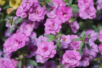 Fototapeta Kwiaty. obraz