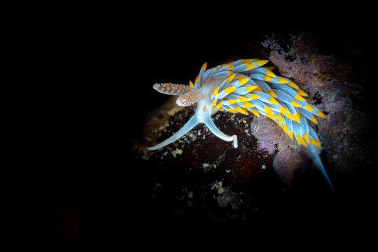 Nudibranch in the Mediterranean Sea