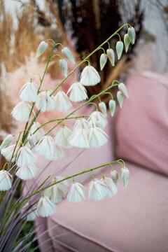 Pink sofa surrounded by herbs, dried flowers and cereals.Beautiful interior in eco style.