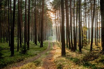 Obraz Zachód słońca w lesie - fototapety do salonu