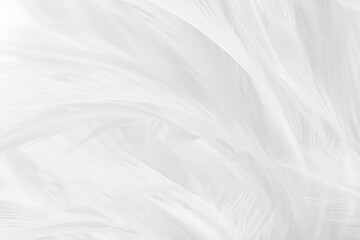 white feather texture background,pastel soft fur for baby to sleep.