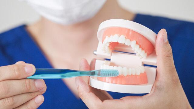 歯科衛生士・歯医者
