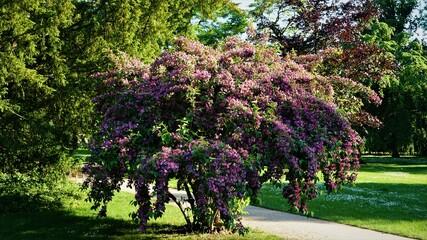 Obraz Nieznany krzew w Podebradach - fototapety do salonu