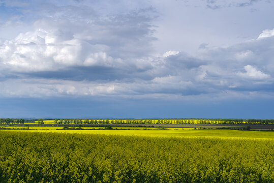 Rapeseed field, Podilia region, South-Western Ukraine