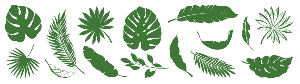 Set of Tropical leaves. Collection green leaves palm, fan palm, banana leaves. Nature leaves collection. Vector illustration.