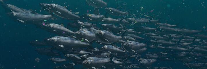 Obraz school of herrings between plastic pollution, microplastic particles in ocean water - fototapety do salonu