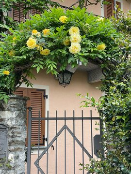 Cancello con rose