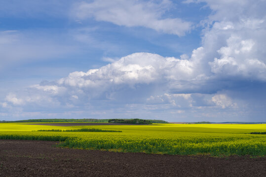 Spring agricultural landscape, Podilski Tovtry nature reserve, Podilia region, South-Western Ukraine